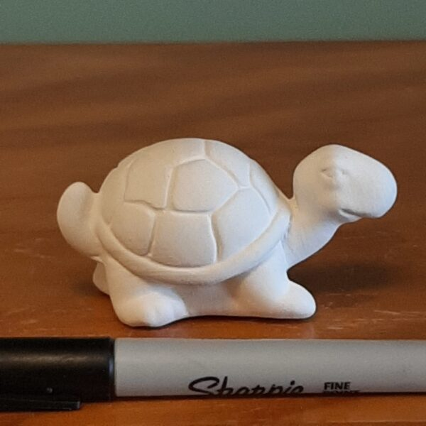 Gus the Turtle