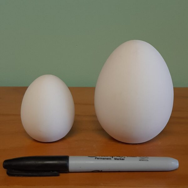 Large and Small Egg